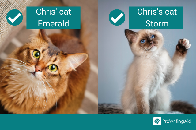 Chris' two Cats