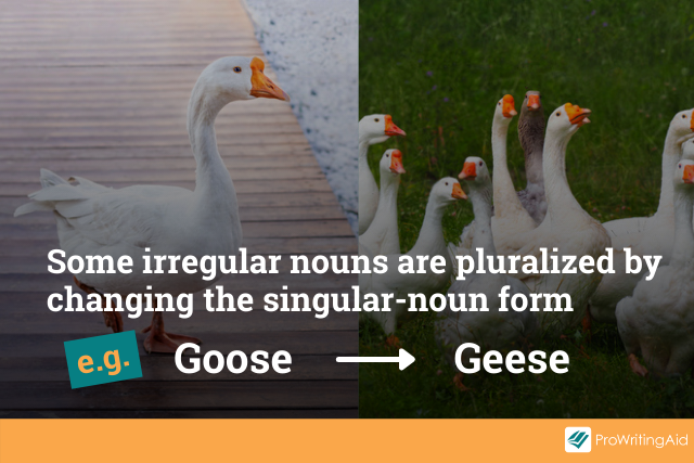 example: goose becomes geese