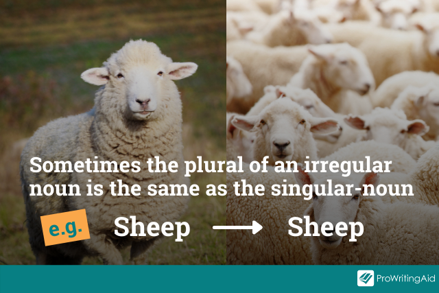 example: sheep stays as sheep