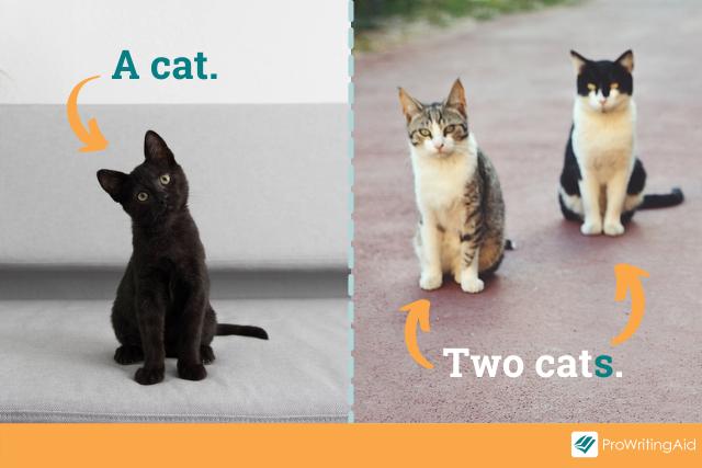 plural noun example: cat > cats