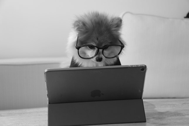Pomeranian wearing glasses looking at computer screen